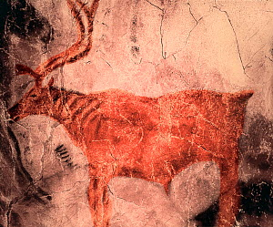 Prehistoric rock painting of Reindeer in Tito Bustillo cave, Asturias, Spain. July 2008. - Angelo Gandolfi