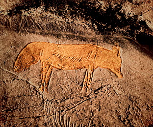 Prehistoric rock painting of a fox (Vulpes vulpes), Albxerri cave, Pais Vasco, Spain. July 2008. - Angelo Gandolfi