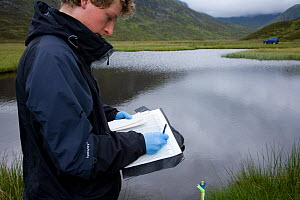 Researcher records field notes on Upland water vole (Arvicola terrestris) as part of Cairngorms Water Vole Conservation Project, Scotland, UK, July 2008 - Peter Cairns / naturepl.com