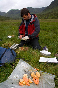 Carrots and potatoes used to bait Upland water vole (Arvicola terrestris) as part of conservation project, Cairngorms, Scotland, UK, July 2008, Model released - Peter Cairns / naturepl.com