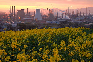 Grangemouth Oil Refinery with oil seed rape in the foreground, dusk, Grangemouth, Central Scotland, UK, May 2008  -  Peter Cairns / naturepl.com