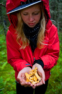 Woman holding chanterelle mushrooms in the forest, Norway, July 2007, model released  -  Peter Cairns