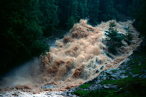 Flash flood, Kinloch Rannoch, Perthshire, Scotland, UK, June  -  Laurie Campbell