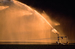 Water spray irrigating arable field, Berwickshire, Scotland, UK, May  -  Laurie Campbell