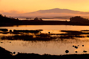 Rannoch Moor at dawn, Inverness-shire, Scotland, September - Laurie Campbell