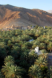 Date palm plantation, new houses and the old village of Birkat al Mawz at the foothills of the Jabal al Akhdar mountains, Oman, February 2003  -  Hanne & Jens Eriksen