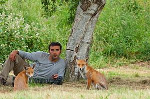 Photographer, Laurent Geslin, with a Red fox (Vulpes vulpes) vixen and cub, that are habituated to his presence, England  -  Laurent Geslin