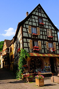 Traditional timber-frame houses with window boxes and floral tubs, Kaysersberg village, Upper Rhine, Alsace, France, May 2009 - Jouan & Rius