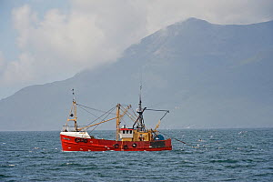 Inshore fishing boat trawling for Langoustines / Norway lobsters near Eigg, Small Isles, Hebrides, Scotland, June 2008 - Chris Gomersall