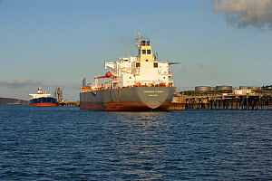 Oil tankers unloading at Milford Haven terminal, Pembrokeshire, Wales, August 2008  -  Chris Gomersall