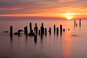 Baltic sea with posts sticking out of water at sunset, Latvia, June 2009  -  Wild Wonders of Europe / López