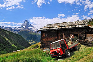 Farmer storing hay in traditional wooden granary / raccard near Findeln, the Matterhorn in the distance, Valais, Switzerland, July 2009 - Philippe Clement