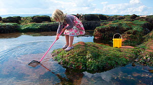 Young girl fishing in a tidepool on Exmouth Beach, Devon, UK, September 2009, Model released.  -  Dan Burton