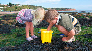 Children checking their bucket for animals caught in a tidepool on Exmouth Beach, Devon, UK, September 2009, Model released.  -  Dan Burton