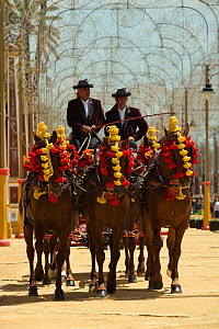 Five traditionally dressed horses, pulling a carriage, parade during the Feria Del Caballo (Horse Fair), Jerez De La Frontera, Andalucia, Spain, May 2009  -  Kristel Richard