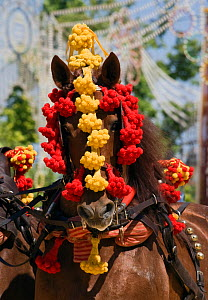 Portrait of a traditionally dressed horse parading during the Feria Del Caballo (Horse Fair), Jerez De La Frontera, Andalucia, Spain, May 2009  -  Kristel Richard