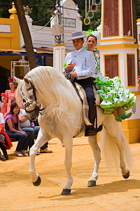 A traditionally dressed Andalusian couple parades with their white Andalusian stallion (Pura Raza Espanola) during the Feria Del Caballo (Horse Fair), Jerez De La Frontera, Andalucia, Spain, May 2009  -  Kristel Richard