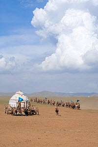Re-enactement of the movement of the mounted armies of Genghis Khan (emperor of the Mongol Empire) during the Genghis Khan Show, in Ulaanbaatar, Mongolia. The horses are Mongolian horses. July 2007  -  Kristel Richard