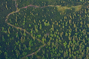 Aerial view of path in mountain forest of Norway spruce (Picea abies) Mountain ash / Rowan (Sorbus aucuparia) and the Dwarf mountain pine (Pinus mugo) zone, Western Tatras, Carpathian Mountains, Slova...  -  Wild Wonders of Europe / D'Amicis