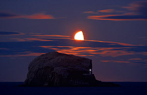 Northern gannet (Morus bassanus) colony, Bass Rock with the moon rising, Firth of Forth, Scotland, August 2009 - Wild Wonders of Europe / Green