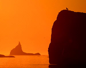 Icebergs silhouetted at sunset, Disko Bay, Greenland, August 2009  -  Wild Wonders of Europe / Jensen