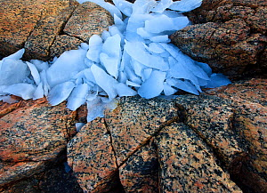 Ice fragments on coastal rocks, Saqqaq, Greenland, August 2009  -  Wild Wonders of Europe / Jensen