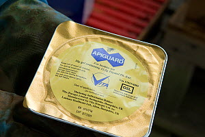 Apiguard Gel, active ingredient thymol, a naturally occurring substance derived from thyme used to treat Honey bees (Apis mellifera) against varroa mite, Buckinghamshire, England, UK - Andy Sands
