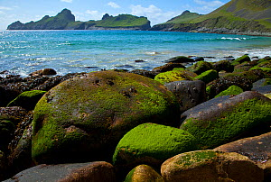Village Bay coast, St. Kilda, Outer Hebrides, Scotland, UK, June 2009 - Wild Wonders of Europe / Muñoz