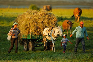 Farming family going home from work with a horse pulling cart full of hay, Lake Prespa National Park, Albania, June 2009  -  Wild Wonders of Europe / Geidemark