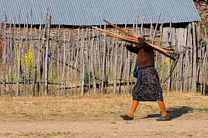 Woman carrying scythes and hay forks, Lake Prespa National Park, Albania, June 2009  -  Wild Wonders of Europe / Geidemark