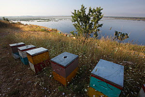 Bee hives on the edge of a lake near Patras, The Peloponnese, Greece, May 2009  -  Wild Wonders of Europe / Ziegler