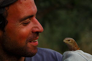 "Field assistant, Bruno d""Amicis, holding European glass lizard (Pseudopus apodus) The Peloponnese, Greece, May 2009  -  Wild Wonders of Europe / Ziegler"