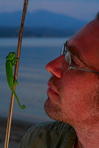 Photographer, Christian Ziegler, with a juvenile African chameleon (Chamaeleo africanus) on a stick, Southern The Peloponnese, Greece, May 2009  -  Wild Wonders of Europe / Ziegler