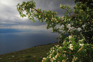 View from Mount Baba of Lake Ohrid, Galicica National Park, Macedonia, June 2009  -  Wild Wonders of Europe / Maitland