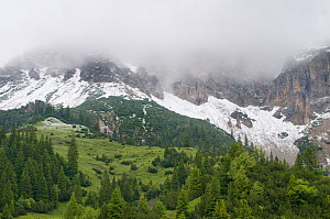 Fresh snow below mountains hidden in clouds with European larch trees (Larix decidua) growing, Liechtenstein, June 2009  -  Wild Wonders of Europe / Giesbers