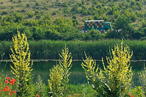 An old truck full of beehives near Skrka Lake, Common poppies (Papaver rhoeas) and (Verbascum speciosum) in the foreground, Hutovo Blato Nature Park, Bosnia and Herzegovina, May 2009  -  Wild Wonders of Europe / della Ferrera