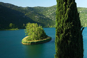 Mediterranean cypress (Cupressus sempervirens) on the edge of Ocu�a jezero, one of the Bacinska Jezera (Lakes of Bacina) Dalmatia region, Croatia, May 2009  -  Wild Wonders of Europe / della Ferrera