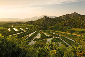 Cultivated part of the lower Neretva river delta, Dalmatia region, Croatia, May 2009  -  Wild Wonders of Europe / della Ferrera