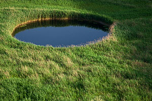 Sinkhole in marshland covered in Reeds (Phragmites sp) near the lower Neretva river delta, Dalmatia region, Croatia, May 2009  -  Wild Wonders of Europe / della Ferrera