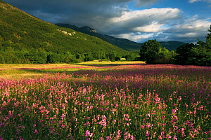 Meadow with flowering Sticky catchfly (Silene viscaria) and slopes of the Dinara mountain range, Gubin area, Livanjsko Polje, Bosnia and Herzegovina, May 2009  -  Wild Wonders of Europe / della Ferrera