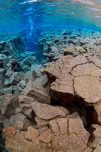 Underwater landscape showing the tectonic boundary between the Eurasian and the North American plates, with a diver in the distance, Silfra, Thingvellir lake, Thingvellir National Park, Iceland, May 2...  -  Wild Wonders of Europe / Lundgren