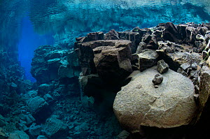 Underwater landscape showing the tectonic boundary between the Eurasian and the North American plates, Silfra, Thingvellir lake, Thingvellir National Park, Iceland, May 2009  -  Wild Wonders of Europe / Lundgren