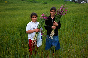Girls holding Field gladiolus (Gladiolus italicus) flowers picked from the fields, Northern Cyprus, April 2009  -  Wild Wonders of Europe / Lilja