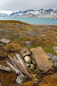 Pomor grave, Trygghamna, Svalbard, Norway, July 2008 - Wild Wonders of Europe / de la Lez