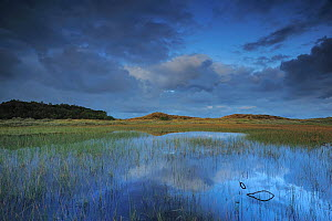 Lobelia lake at daw, Vangs� Dune Heath, Thy National Park, Denmark, July 2009  -  Wild Wonders of Europe / Bartocha