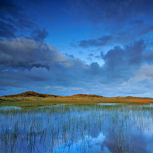 Lobelia lake at dawn, Vangs� Dune Heath - Thy National Park, Denmark, July 2009  -  Wild Wonders of Europe / Bartocha