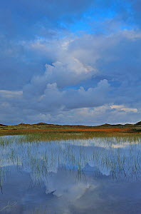 Lobelia lake with clouds reflected in water at dawn, Vangs� Dune Heath, Thy National Park, Denmark, July 2009  -  Wild Wonders of Europe / Bartocha