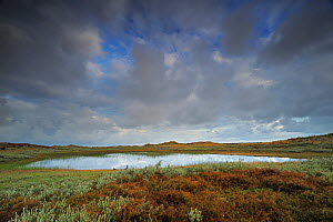 Lobelia lake, Vangs� Dune Heath, Thy National Park, Denmark, July 2009  -  Wild Wonders of Europe / Bartocha