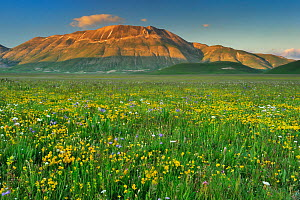 Wildflower meadow, Piano Grande, Monti Sibillini National Park, Umbria, Italy, May 2009 - Wild Wonders of Europe / Bartocha