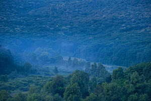 Light mist over trees in the Codrii reserve at dawn, Central Moldova, July 2009  -  Wild Wonders of Europe / Geslin